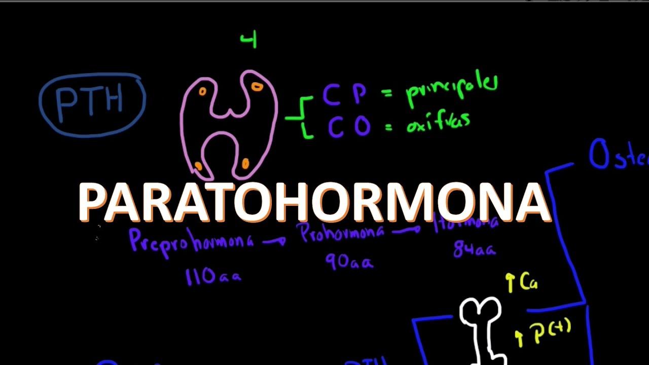 Metabolismo del calcio: Paratohormona (2 de 5) - YouTube