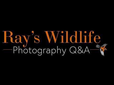 Wildlife Q&A - What Monopod Head Do I Use?