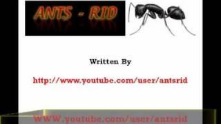 killing Ants with Borax