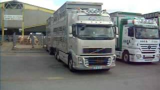 marché aux bestiaux cholet (livestock-express.sky')