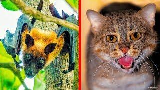 7 seltene Tiere in Indien gefunden