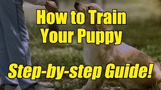 A Step By Step Guide on How to Train Your Puppy!