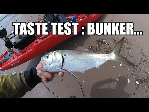 TRASH FISH CATCH & COOK : What Does BUNKER Taste Like?....(Menhaden)