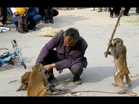 Méchanceté gratuite: Drôles de singes à mourir de rire