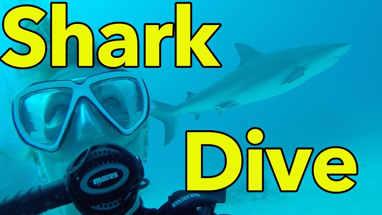 Gopro shark dive with reef oasis dive club bahamas youtube - Reef oasis dive club ...