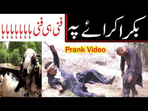 Bakra karaye pe Kirlo Airpot very funny video By You TV