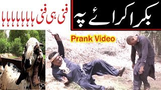 Bakra karaye pe Kirlo Airpot very funny video By You TV