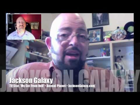 My Cat From Hell star Jackson Galaxy coughs up Mr. Media! INTERVIEW 2/2