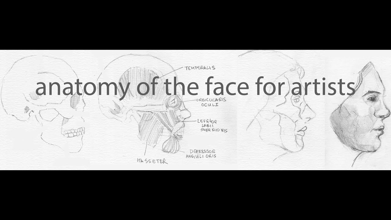 Anatomy Of The Face For Artists Muscles Bones And Drawing Youtube