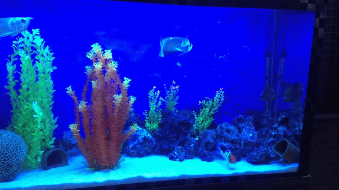 Fish aquarium in janakpuri -