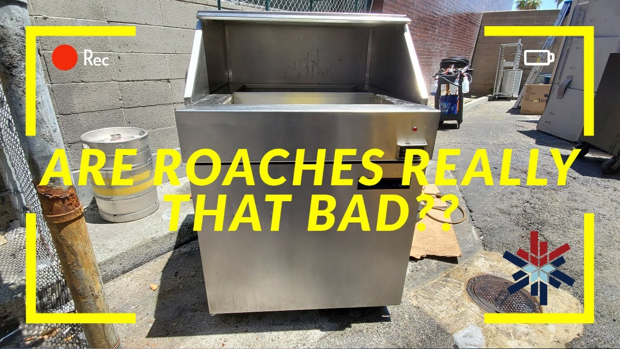 ARE ROACHES REALLY THAT BAD??