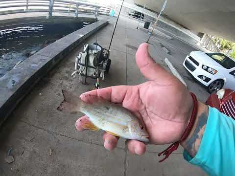Fishing Under Sarasota Bridge