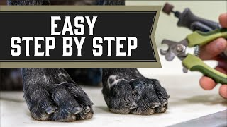 How To Trim Dog Nails The Right Way  From Puppies To Senior Dogs