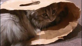 종이 가방에 고양이 담기 How to bag your …
