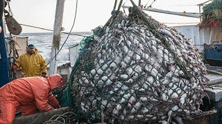 Big Catch Fishing in The Deep Sea With Big Boat - Amazing Fish  Processing Line