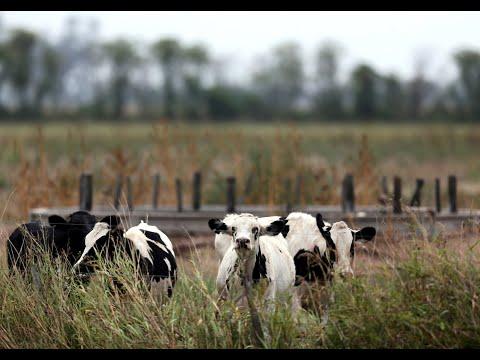 -كورونا- يخفض صادرات الأبقار الأرجنتينية للصين  - نشر قبل 13 ساعة