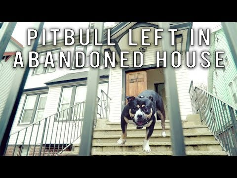 Pitbull Left In Abandoned House | New York Bully Crew