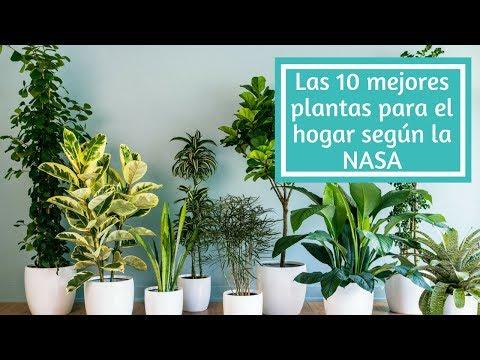 Las 10 mejores plantas para el hogar según la NASA
