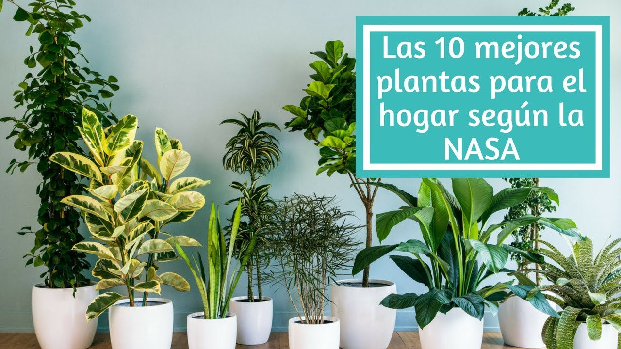 mejores plantas de oficinas grandes Las 10 Mejores Plantas Para El Hogar Segn La NASA