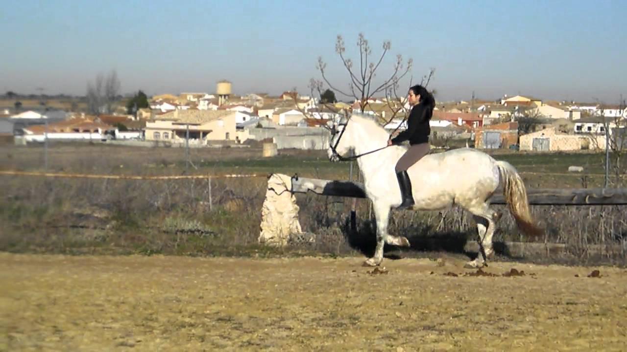 sexo porno con caballos