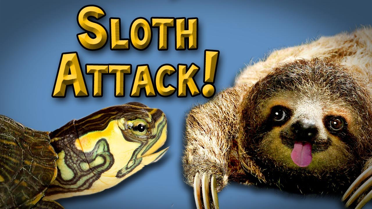 Attack of the Sloth! - YouTube