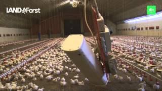 Hofreport: Hähnchenmäster spart durch Wärmetauscher