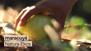 Ekos Maracuyá