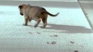 gà trống nuôi con phiên bản cờ hó cực dễ thương :))