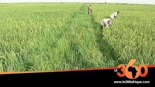Le360.ma • Afrique de l'Ouest: quels partenariats face au défi de la sécurité alimentaire