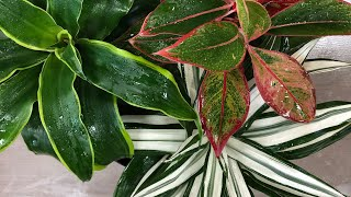 Смотреть видео где я покупаю комнатные растения в Москве онлайн