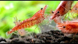 my 10g planted shrimp endler tank