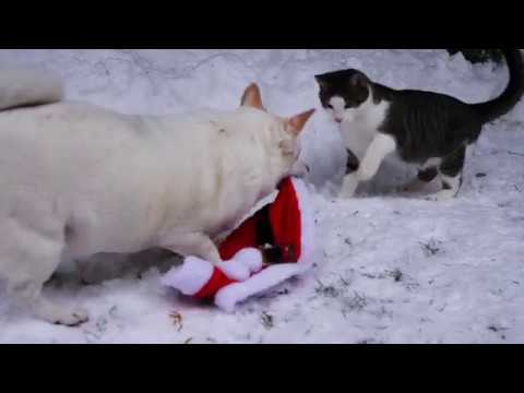 Cats in the snow 4k UHD 🐈 🐱 Aaron Kenny - The Curious Kitten (No copyright music)