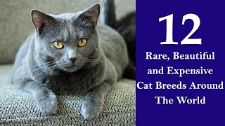 12 Most Rare Cat Breeds