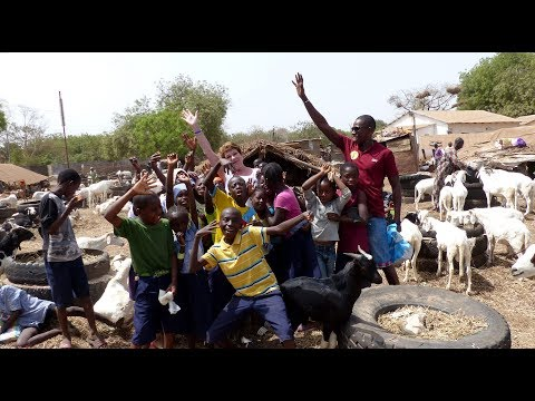 The Gambia 3 - Trip with Guide/Driver Muhammed Sisawo to Animal Market at Abuko / 2018