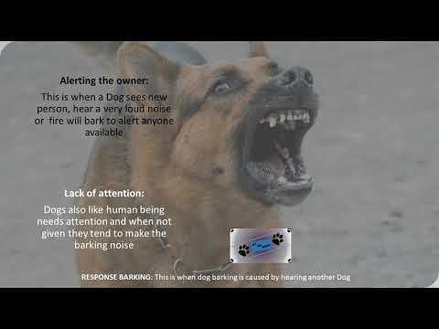 top-funny-dog-barking-2018!-response-dog-barking