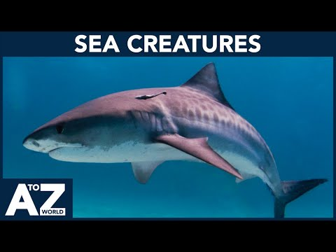 A To Z Of Sea Creatures | ABC Of Sea Creatures Starting From A To Z