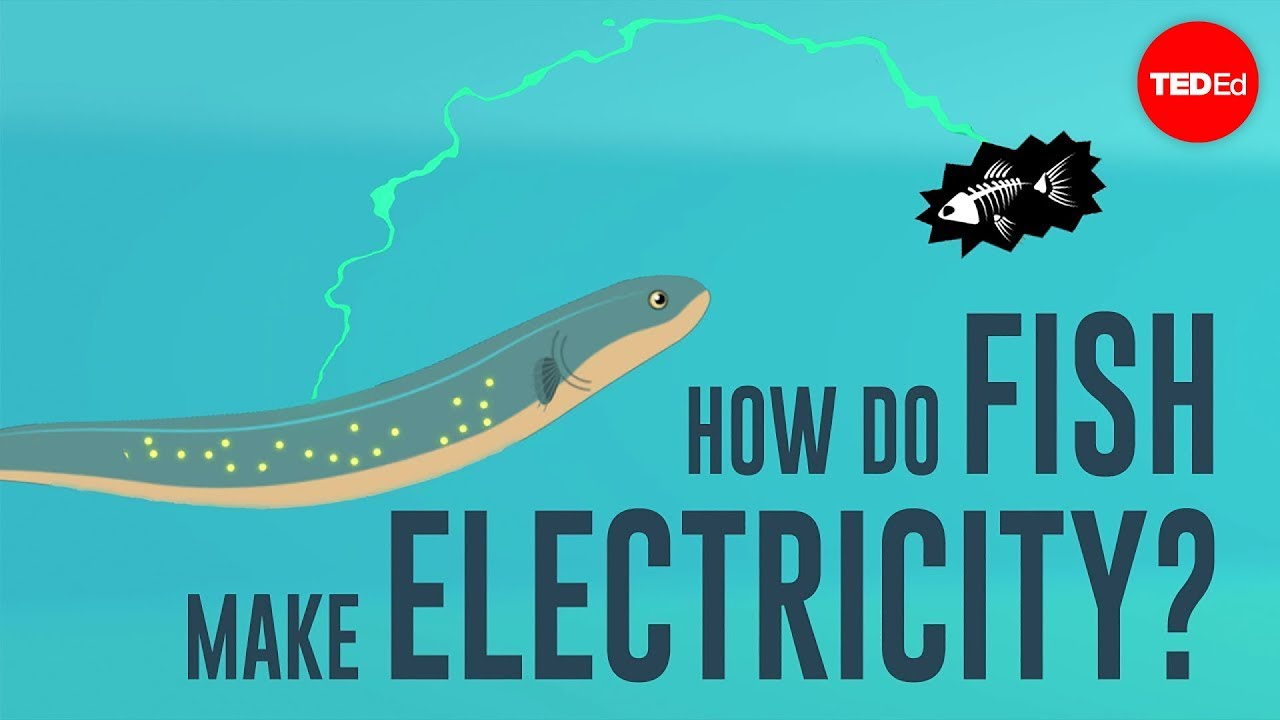 How Do You Create Electricity Drain Are How To Produce Electricity