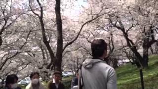 第84回 幸手桜まつり 5