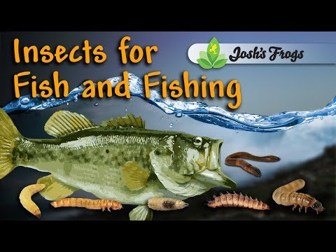 6 Live Insect Varieties For Freshwater Fishing Bait