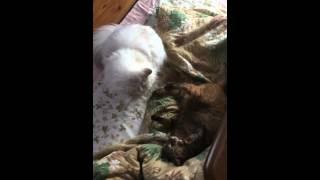 猫の喧嘩.