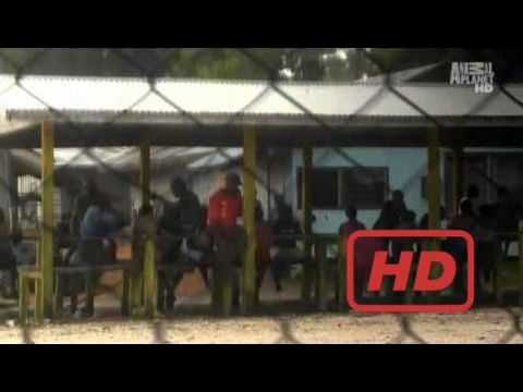 Dolphin Documentary Solomon Islands Blood Dolphins Part 1