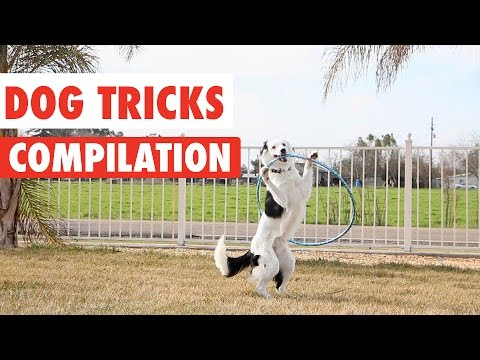 Amazing Dog Tricks Video Compilation 2017