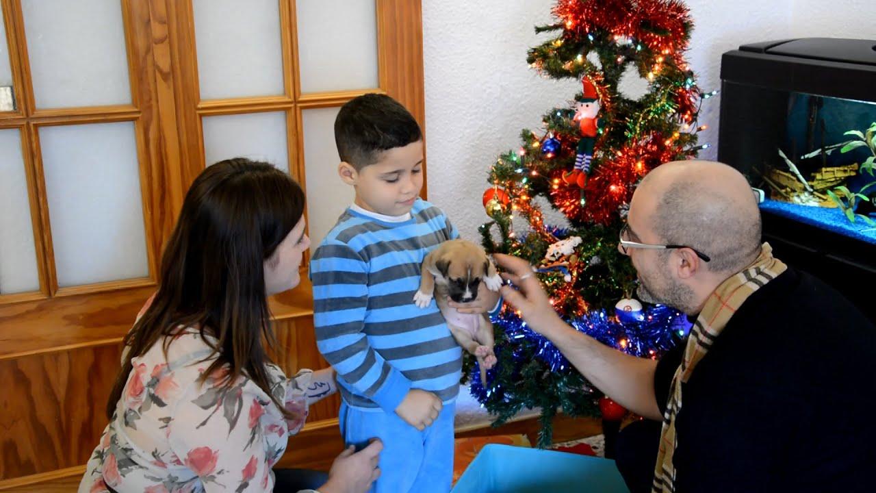No Compres Ni Regales Un Perro Para Navidad Youtube