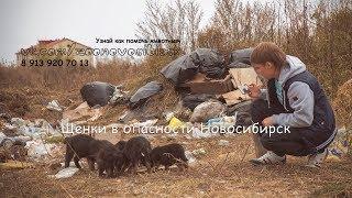 Восемь щенят найдены выброшенными на свалку волонтеры просят помощи homeless puppies