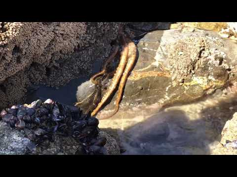 Live HUGE Octopus On Land! Testing the Waters? Lol