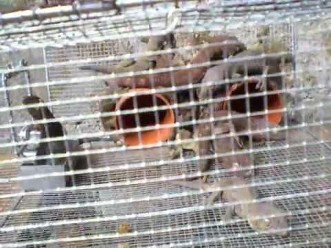 gecko traps how to make