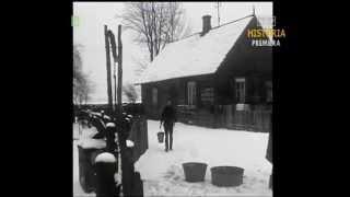 PRL 1973 Białostocka wieś. Hodowla zwierząt. Wyszomierz Wielki