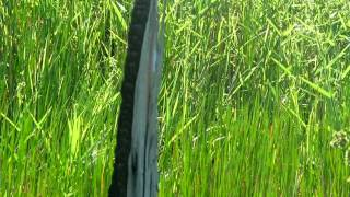 Lenda das Lagoas de Paracatu-Didi Paracatu