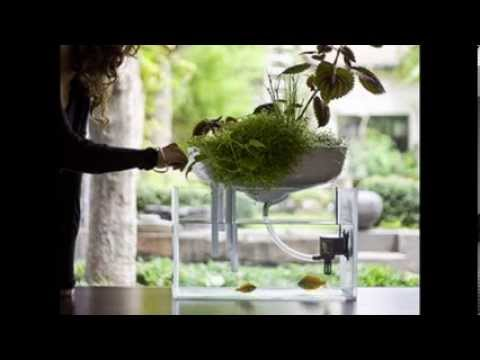 schwimmender mini garten dient als nat rlichen filter f r das aquarium youtube. Black Bedroom Furniture Sets. Home Design Ideas