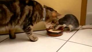 Repeat youtube video real Tom & Jerry.flv